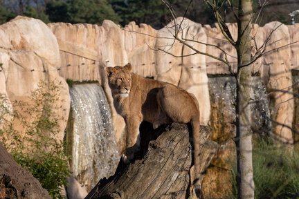 Beauval-0487